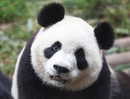 MumptyStyle Panda